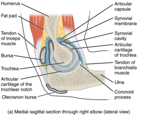 elbowarthritis