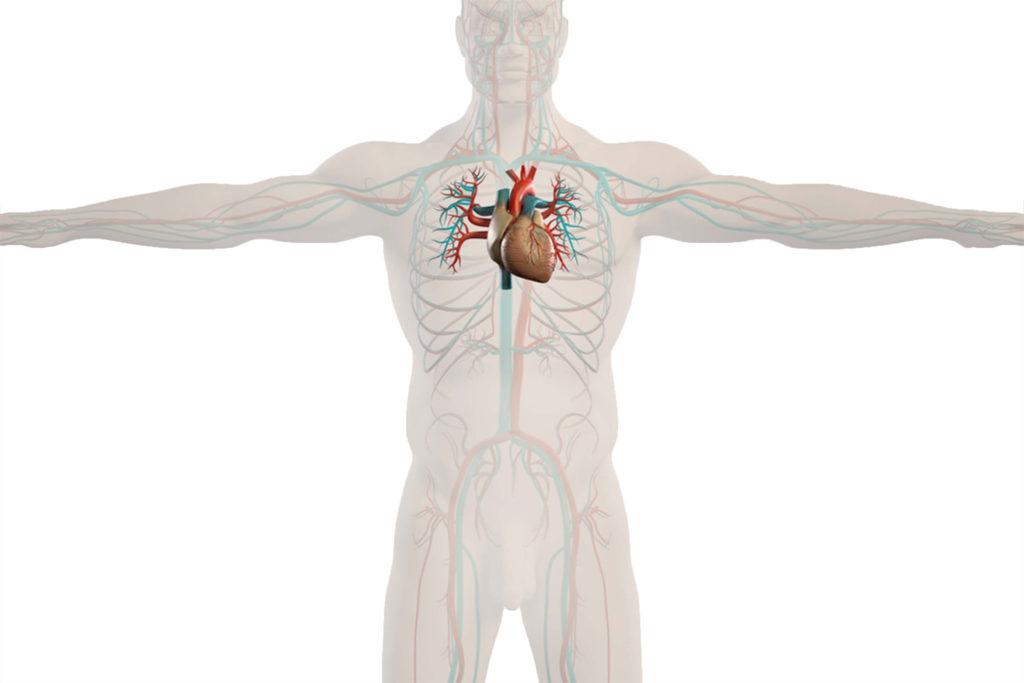 cardiology_02
