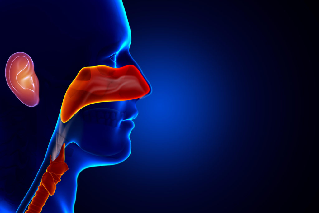 Image result for Ear Nose Throat Doctor